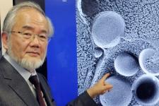 Βραβείο Νόμπελ Ιατρικής 2016 - Γιατί πήρε το Νόμπελ ο δρ Οσούμι - Ας δούμε τι είναι η αυτοφαγία (vid)